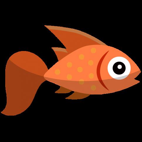 Aquarium Installations